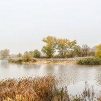 Туманное утро на реке Цне................... :: Александр Селезнев