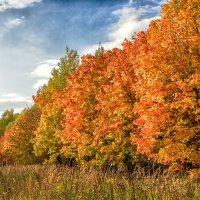 Осенние краски 2 :: Сергей Филатов