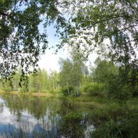 Лесное озеро :: Василь Веренич