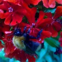 Пчела :: Андрей