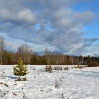 Первый снег! :: Илья Магасумов