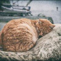 Осенний кот :: Вадим