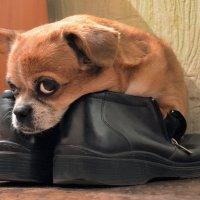 В ботинках :: Владимир Анакин