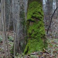 """лесные, мохнатые """"медведи""""... :: Михаил Жуковский"""