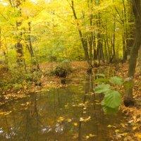 лесной ручей :: Владимир Зырянов