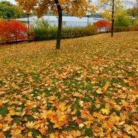 Осенние краски... :: Vladimir T