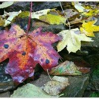 Осень. :: kvstu