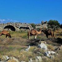 Среди античных руин... :: Sergey Gordoff