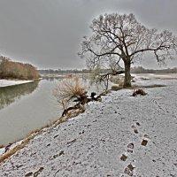 Дерево в непогоду на Лугу :: Дубовцев Евгений
