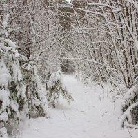 Выпал снег. :: Галина .