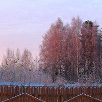 Розовое утро ноября :: Татьяна Ломтева