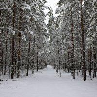 В снежном царстве :: Леонид Чащин