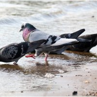 Сейчас как ТОПНУ ногой... полетят клочки по закаулочкам... )) :: Алёна PRIVALOVA