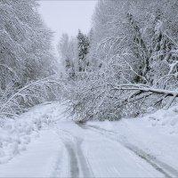 По дороге из деревни в город... :: Александр Никитинский