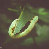 Гусеница 3 :: Виктор