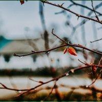 Осень. :: Юрий Фёдоров