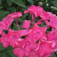 Красивые цветы :: Дмитрий Никитин