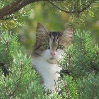 Просто кошка :: Анна Азарёнок