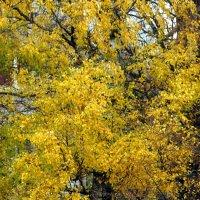 Осень стучится в окна :: Михаил Новиков