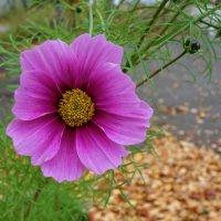 Осенние...,eщё они прелестны... :: Galina Dzubina
