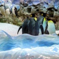 Пингвины 2 :: Андрей Бондаренко