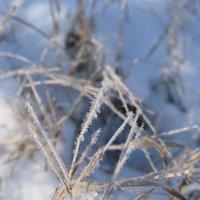 первый снег :: Елена М