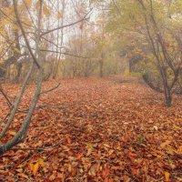 Осенний ковер :: Никита Юдин
