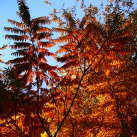 Золотая осень :: Mari-Bly