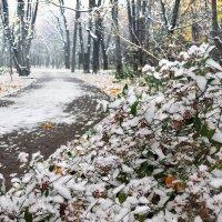 Первый снег :: Денис Масленников