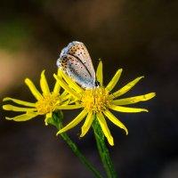 Маленькая бабочка. :: Владимир