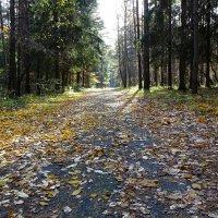 Листья жёлтые под ноги нам ложатся :: Милешкин Владимир Алексеевич