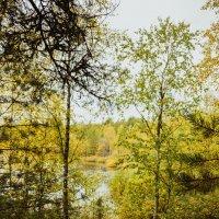 На подходе к озеру :: Ольга Нежикова