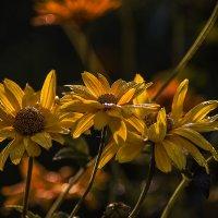 В капельках утренней росы :: Оксана Галлямова