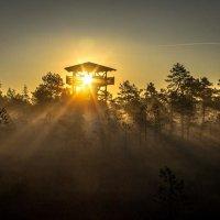 Начинается новый день... :: Anna Leshtshenko