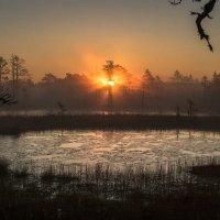 И на болотах бывает красиво... :: Anna Klaos
