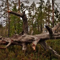 Лесной монстр. :: Лариса Красноперова