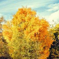 Первые опавшие листья :: Алёна Найдёнова