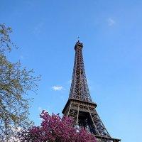 Весна в Париже :: svetlana.voskresenskaia