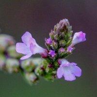 Полевые цветы... :: Николай Саржанов
