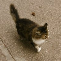 Кошка, которая гуляет сама по себе :: татьяна