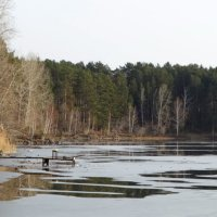 первый лёд :: Alla Swan