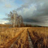 И  уж ноябрь на дворе. :: nadyasilyuk Вознюк