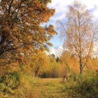 Осень..Грустное время... :: Александр Широнин