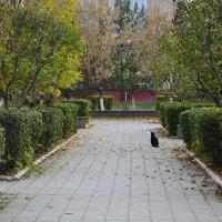 Одинокий котэ (( :: Анастасия Фомина