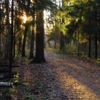 Солнечный денек в ноябре :: Андрей Лукьянов