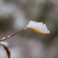Снег на листике :: Александр Синдерёв