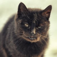 Cat :: Денис