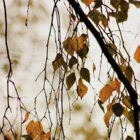 Осень :: Софья Богаткина