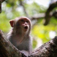 Китай. На острове обезьян :: Владимир Шадрин