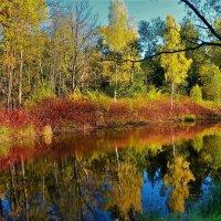 В тихой заводи... :: Sergey Gordoff
